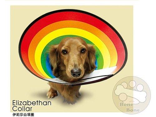伊莉莎白寵物項圈-彩虹/寵物項圈/狗項圈/M