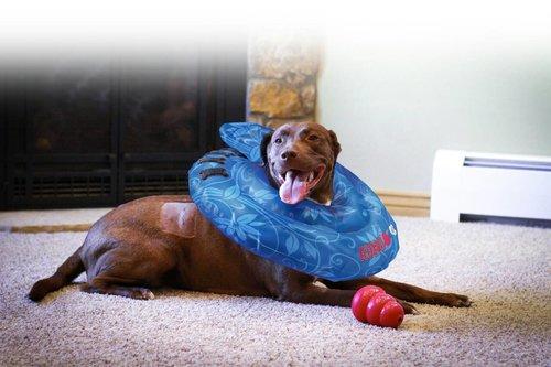 KONG CUSHION 新款 拿破崙 氣墊軟頭套 XL 大型犬用 項圈 頸圈 頭套