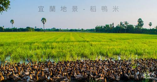 宜蘭稻鴨米