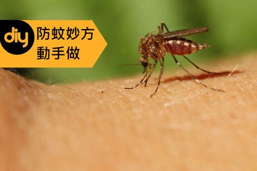 自製防蚊妙方