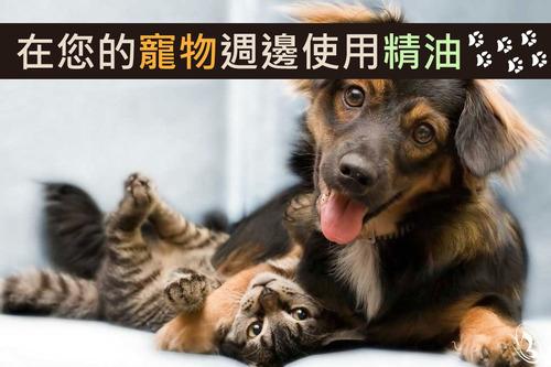 寵物使用精油